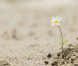 Flower growing in the dry ground